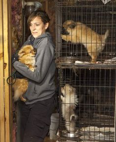 More than 140 dogs found in Choctaw Co. puppy mill - WBTV 3 News, Weather, Sports, and Traffic for Charlotte, NC Buy Puppies, Stop Animal Cruelty, Puppy Mills, Pet Store, Humane Society, Little People, The Life, Best Dogs, Kittens