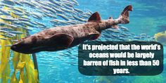 Are the #Oceans Running Out of Fish? http://onegr.pl/1zuoZ0f #SaveOurOceans #ProtectOurOceans pic.twitter.com/4tLIy1IGPY
