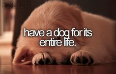Have a dog for its entire life // #bucketlist