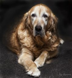 I LOVE old dogs :-) Pets are family and we are more blessed by each day we get to spend together!
