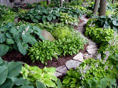 Hosta garden with limestone paths