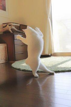 瀬戸にゃん ちさ♢重力無視のミルコのお家 @ccchisa76  4月2日 愛猫ミルコ。ムチムチ。