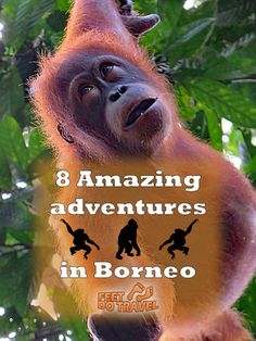 Borneo is amazing with so much to see and do, it's difficult to pick what to see first. Here are our 8 tips for a first time visitor.