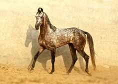 Top 12 Beautiful Horses In The World You Should Know - The horse is considered the most faithful friend of man, being used in wars in the ancient times, being used as a pet and for horse riding. Horses are. All The Pretty Horses, Beautiful Horses, Animals Beautiful, Majestic Animals, Marwari Horses, Breyer Horses, Arabian Horses, Campolina, Rare Horse Breeds
