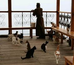 I'm Orthodox. I love animals. Here are some pictures of animals with a connection to Orthodoxy. Orthodox Priest, Orthodox Christianity, I Love Cats, Cool Cats, World Religions, Cat People, Orthodox Icons, Animals Of The World, Animal Pictures