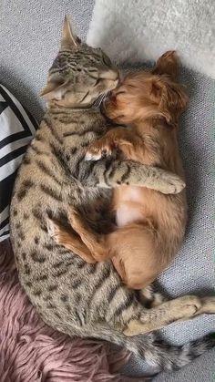 Cute Little Animals, Cute Funny Animals, Funny Dogs, Cute Dogs, Cute Animal Videos, Cute Animal Pictures, Cute Kittens, Ragdoll Kittens, Tier Fotos