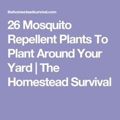 26 Mosquito Repellent Plants To Plant Around Your Yard   The Homestead Survival