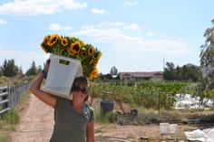 Fresh produce and flowers for the Prescott, Chino Valley and Flagstaff communities. Find us at a farmers market or buy through our CSA, Farm Life, Biceps, Farmers Market, Sunnies, Fresh, Garden, Flowers, Beautiful, Garten
