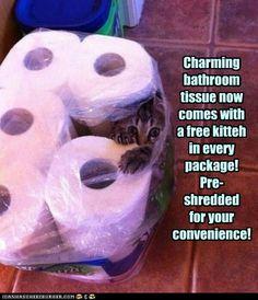 Do not flush kitteh!