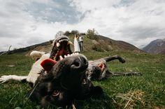 Двое в горах не считая собаки – 17 фотографий