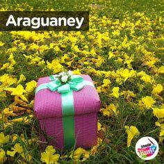 De amarillo  son las ideas el optimismo la creatividad la alegría y el #Araguaney todo un regalo de la naturaleza nuestro árbol nacional . Día del  Araguaney  (decretado por Romulo Gallegos en 1948). . #Merceria #hilos #cintas #lazos #manualidades #ideas #hechoamano #handmade #hechoenvenezuela #madeinvenezuela #designersve #diseñovenezolano #venezuelacreativa #hechoconamor #madeinvzla_ #Caracas #LosPalosGrandes #CentroPlaza #Altamira #Chacao #Venezuela