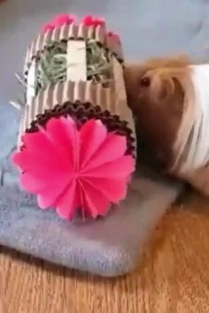Watch Winnie play with her Mini Hay Roller from WinniGuineaPoo!  Click link to purchase.