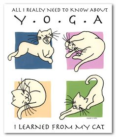 All I need to know about Yoga I learned from my cat.