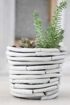 Curiousity Planter: Using air-dry clay to create a 'bone' planter cover.