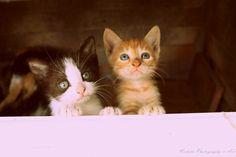 ®2017 Nickita Photography & Art Fotografía |Photography | [ Cleopatra y sus bebes]   FanPage https://www.facebook.com/NickitaPhotographyAndArt/  fotografias https://www.facebook.com/pg/NickitaPhotographyAndArt/photos/?tab=album&album_id=809559389168853   #ph #photo #photography #instaphoto #canon #Cats #Gato #Madre #Mother  #fotografia #argentina #remediosdeescalada #bsas #arte #instaart #picsart #artist #artofvisuals