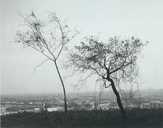 On Signal Hill, Overlooking Long Beach, California - Robert Adams (photographer) - Wikipedia, the free encyclopedia
