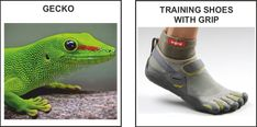 biomimicry shoes - Google Search