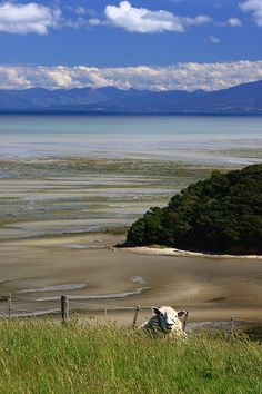 Near Cape Farewell, Northern tip of the South Island, New Zealand