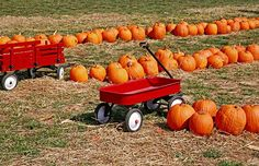 List of Adirondack Corn Mazes and Pumkin Patches