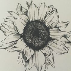 Sunflower Tattoos For Women - Gorgeous Sunflower Tattoos For Women -Gorgeous Sunflower Tattoos For Women - Gorgeous Sunflower Tattoos For Women - Sunshine Love Drawing by J Ferwerda - Sunshine Love Fine Art . Black and White Sunflower Tattoo Designs Future Tattoos, New Tattoos, Cool Tattoos, Tatoos, Gorgeous Tattoos, Sunflower Drawing, Sunflower Tattoos, Sunflower Tattoo Shoulder, Sunflower Mandala Tattoo