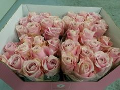 #Rose #Rosa #PinkAvalanche ; Available at www.barendsen.nl