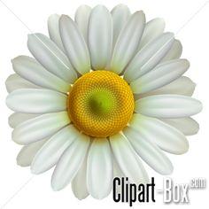CLIPART DAISY FLOWER