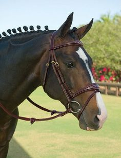 Dy'on Anatomic Bridle    The choice of many of the world's top show jumpers