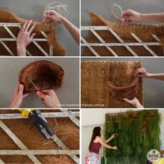 Como fazer um painel verde de Rhipsalis                                                                                                                                                                                 Mais