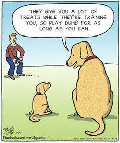 ha ha ha ha ha, my pup must have been told these words of doggy wisdom