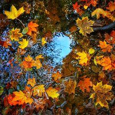 Podzimní #autumnwaterleaves