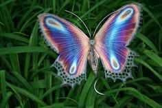Opal Butterfly So beautiful it looks unreal.