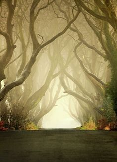 Morning mist at The Dark Hedges in Co. Antrim, Northern Ireland Morning mist at The Dark Hedges in Co. Antrim, Northern Ireland (by Klarens). Dream Vacations, Vacation Spots, Vacation Rentals, Dark Hedges, Places To Travel, Places To See, Dark Places, Beautiful World, Beautiful Places