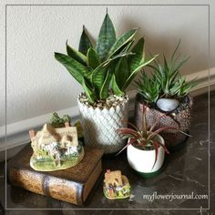 My mom just did a post about her indoor succulents that have lasted over a year! Read more: