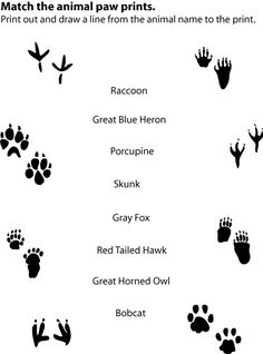 Match animal prints with written name activity - printable on page