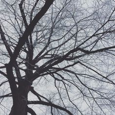 Winter's veins. #winter #cold #nature #freezing #tree #lookup #graphic
