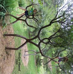 Sooo cool–people who shape trees. How do I learn to do that?