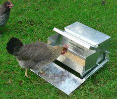 New Chicken Feeder Saves Feed