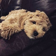 47 best puppy love images dog supplies doggies pets rh pinterest com