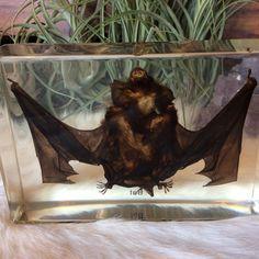 Large Bat Paperweight