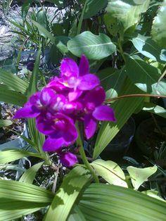 Sara said plantas e cactos -  flores do meu jardim