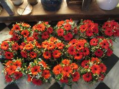 An explosion of colour #red #flowers