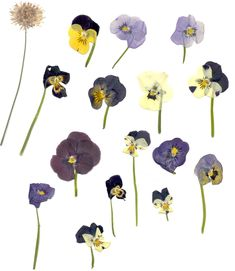How to make enchanting cards, pictures and more by collecting and pressing pretty summer flowers to use in pressed flower art. Overlays, Aesthetic Objects, Dorm Art, Plants Are Friends, Pressed Flower Art, Aesthetic Stickers, Pretty Cards, Summer Flowers, Dried Flowers