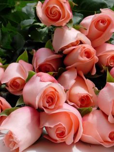 Pretty Peach Color Roses