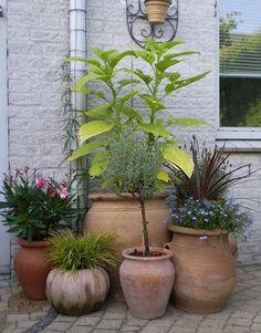 How To Start Organic Gardening Vegetables Code: 2638110373 Tulips Garden, Green Garden, Garden Pots, Garden Ideas, Victory Garden, Garden Stones, Container Gardening, Gardening Vegetables, Lush Green