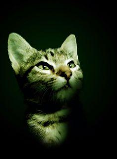 Qsix cat