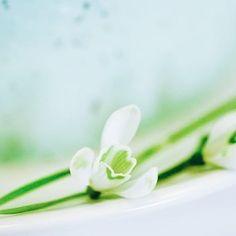 Guten Morgen ihr Lieben! Ich wünsche allen einen schönen Pfingstmontag   #alittlefashion #lifestyle #blogazine #monday #montag #newweek #pfingsten #turquose #torte #türkis #yum #flowers #flowerpower #flowersofinstagram #flowergram #photooftheday #photography #spring #blogger_de #blogger_at #blogger_ch #community #instadaily #dailyinspo #prettylittleinspo #yourdailytreat #livethelittlethings #thatsdarling #yourdailydose #lovedailydose