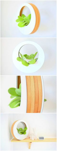 4 x embroidery hoop + some plastic sheet = wicked plant hunger . . . . . . . by Upcycled Planter - northstory