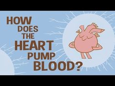 How the heart actually pumps blood - Edmond Hui - YouTube