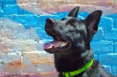 Tales and Tails is a blog written by the owner of three Greyhounds and a German Shepherd, blogging about the adventures, or misadventures, of their daily life.