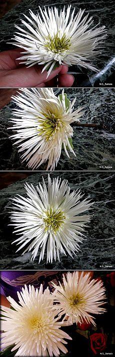 Цветы из фоамирана (пористой резины)